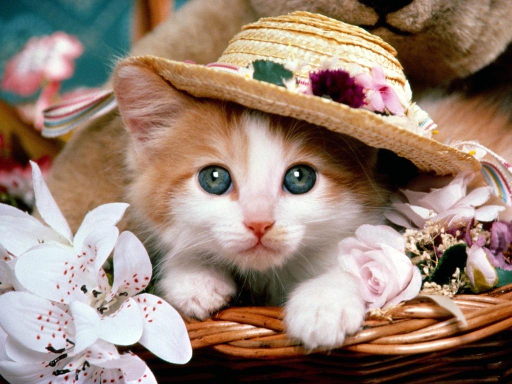 고양이 고화질 사진, 고양이 바탕화면