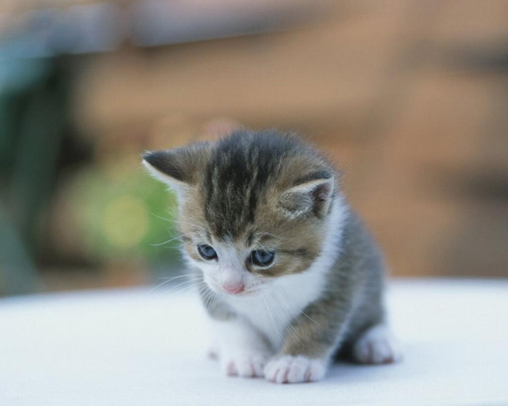 cat, Cats, 고양이, 고양이 고화질, 고양이 고화질 사진, 고양이 바탕화면, 고양이 바탕화면 모음, 고양이 사진, 고양이가 있는 풍경, 고양이들, 고양이들 사진, 고양이바탕화면, 고양이배경화면, 고양이사진, 바탕화면, Wallpapers