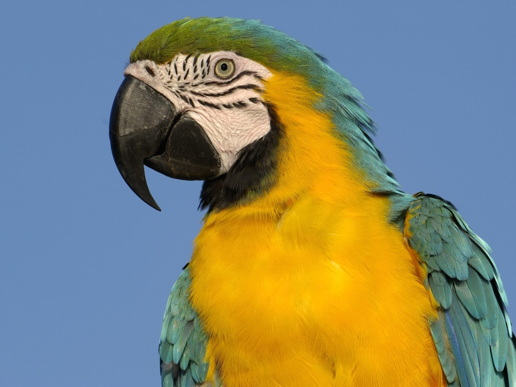 초고화질 동물 바탕화면 (멋진동물사진) 1600*1200