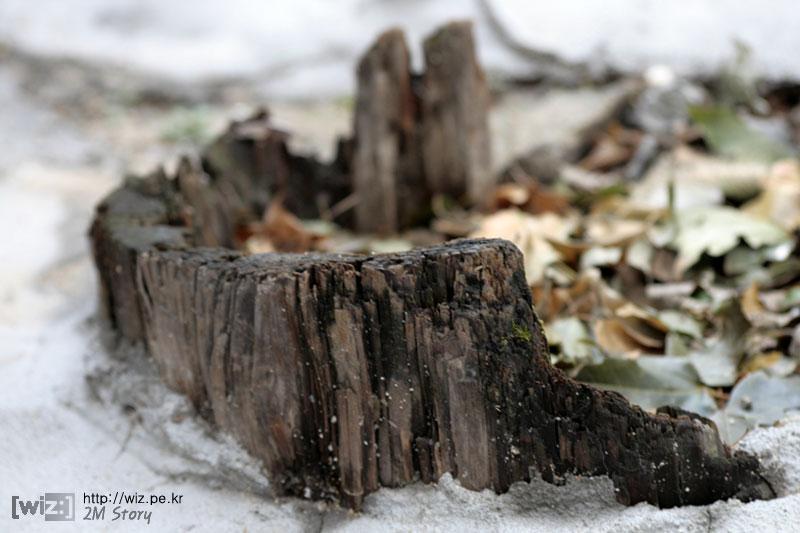 썩어버린 나무뿌리