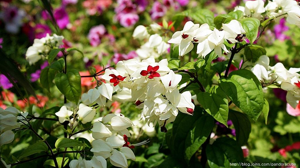 꽃사진 달력